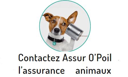 Assur O'Poil contact